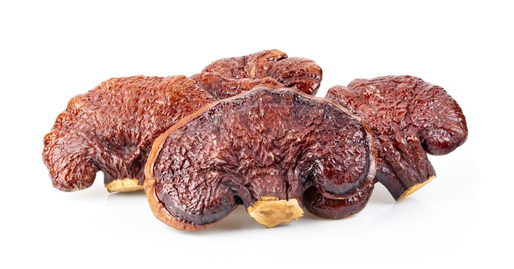 trockener Lingzhi-Pilz Ganoderma Lucidum Isoliert auf weißem Hintergrund
